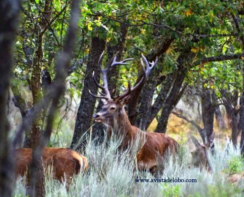 A Vista de Lobo, Observación de Fauna salvaje
