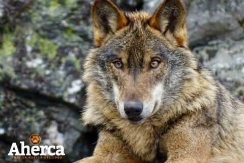 Aherca, Observación de Fauna salvaje